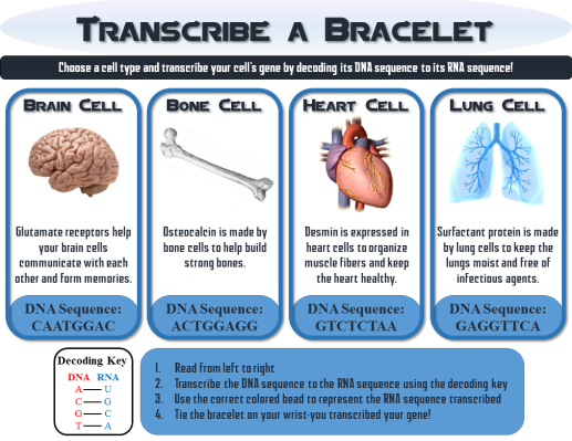 Bracelet Transcription pic